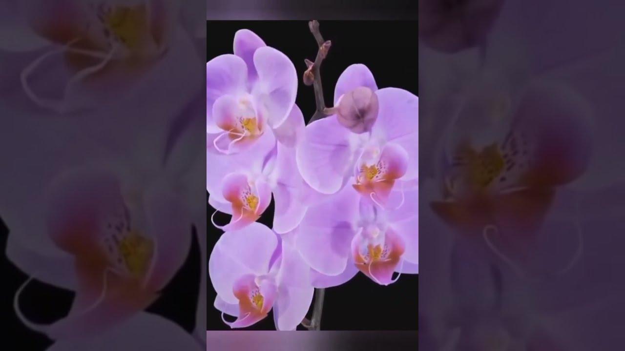 Beautiful Growing Flowers