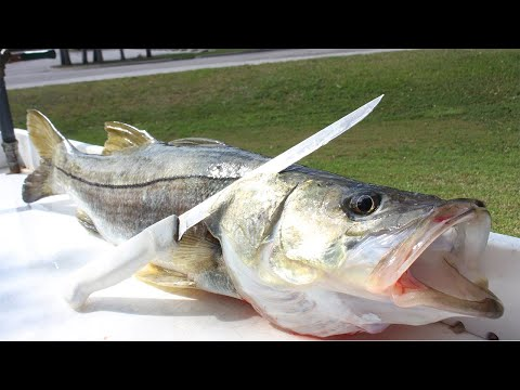 THE ONLY FISH THAT RESTAURANTS DON'T SELL YOU!! Catch Clean Cook Snook (BEST SNOOK RECIPE)