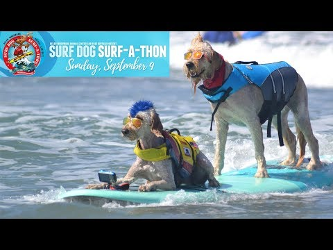 Kramer - Surf Dog Surf A Ton in San Diego May Be Our Coolest Thing Yet!