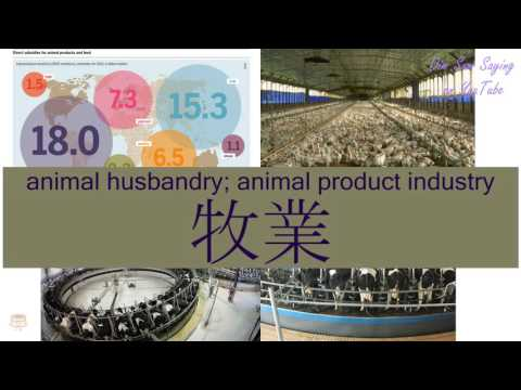 """ANIMAL HUSBANDRY; ANIMAL PRODUCT INDUSTRY"" in Cantonese (牧業) - Flashcard"