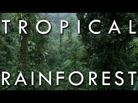Tropical Rainforest - Secrets of World Climate, Episode 1 (New Version)