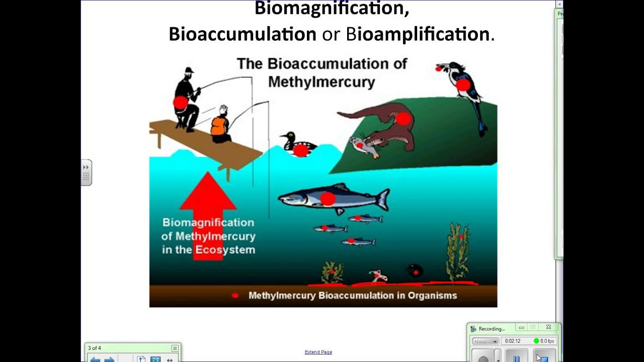 Bioaccumulation youtube