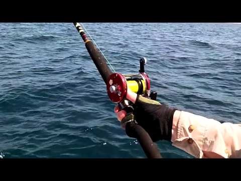 Rompin Sailfish   Ambassadeur 7000C PENN Powerstix Rod   Sport Fishing Asia