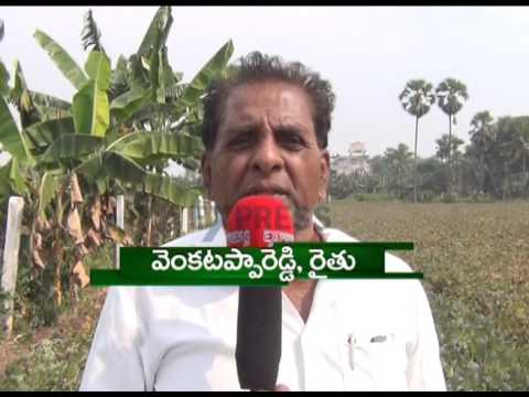 Success story of GBG-1 Blackgram farming | Paadi Pantalu - Express TV