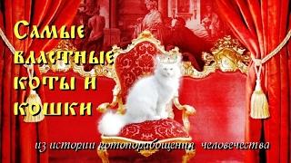 Самые властные коты и кошки (из истории котопорабощения  человечества)