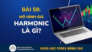 Bài 59: Mô Hình Giá Harmonic Là Gì? Đầu Tư Forex Nâng Cao | Học Forex Online | Chứng Khoán | Bitcoin