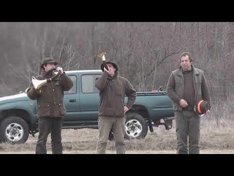 Ásotthalom vaddisznó hajtás (Boar Hunting)  2013