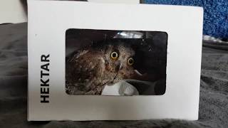 Twig the scops owl. Medical examination and procedures