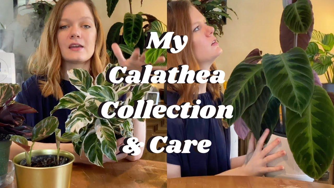 calathea paraziták