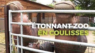 Zoo de PAL : Dans les Coulisses du Zoo le plus étonnant de France