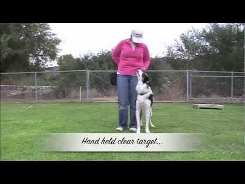 Champion Trick Dog Title - TWIX