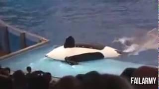 Самые смешные видео приколы с животными   супер приколы 2013 выпуск 9)