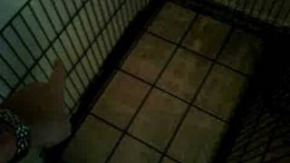 Dog Kennel - Wire Crate Disassembly Part 1