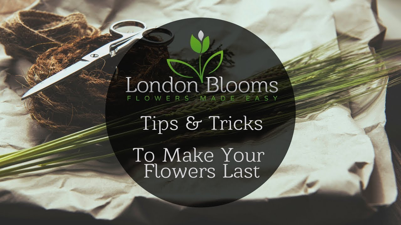 How To Keep Cut Flowers Fresh And Alive Longer London Blooms