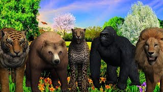 Wild Animals Finger Family song For Children || 3D Animation Rhymes For Kids