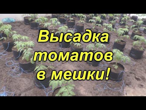 Высадка томатов в