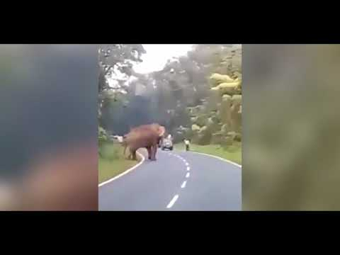 Hippo swallowed a native woman CGI | vore - fallout 4 vore: showing voremersion 1.4 updateKaynak: YouTube · Süre: 1 dakika4 saniye