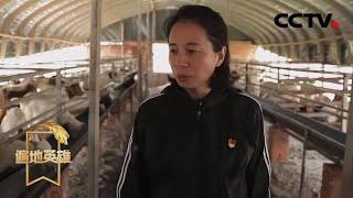 《遍地英雄》 20200527 九年坚守扶贫路|CCTV农业