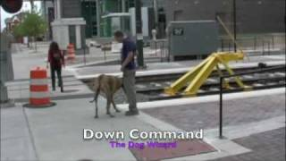 Great Dane - Dog Training Charlotte, Nc- The Dog Wizard