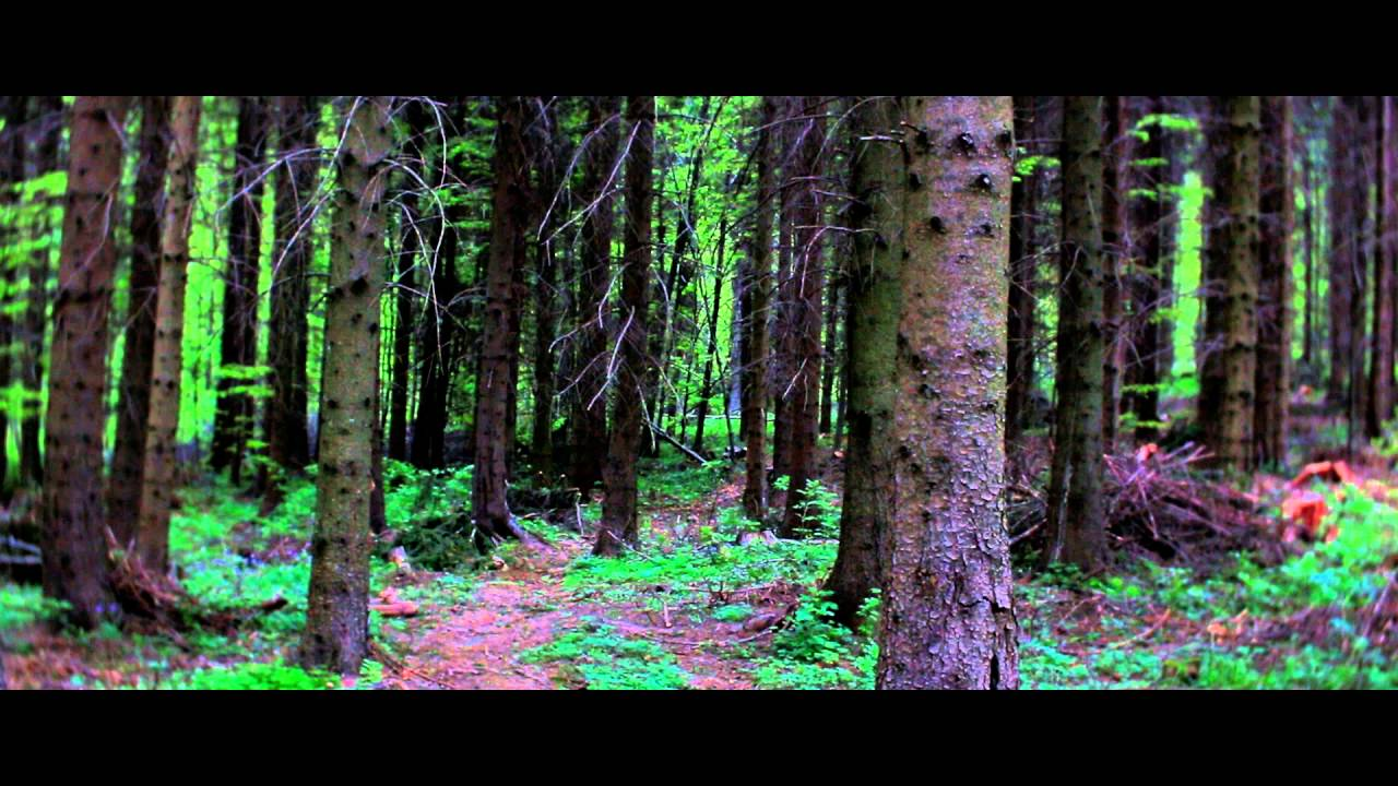 The Daguerreotype Achromat 29 64 Art Lens Forest Youtube Petzval 85 F 22 Bokeh Control Brass