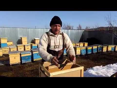 Пчелопакеты и пчелосемьи цена - YouTube