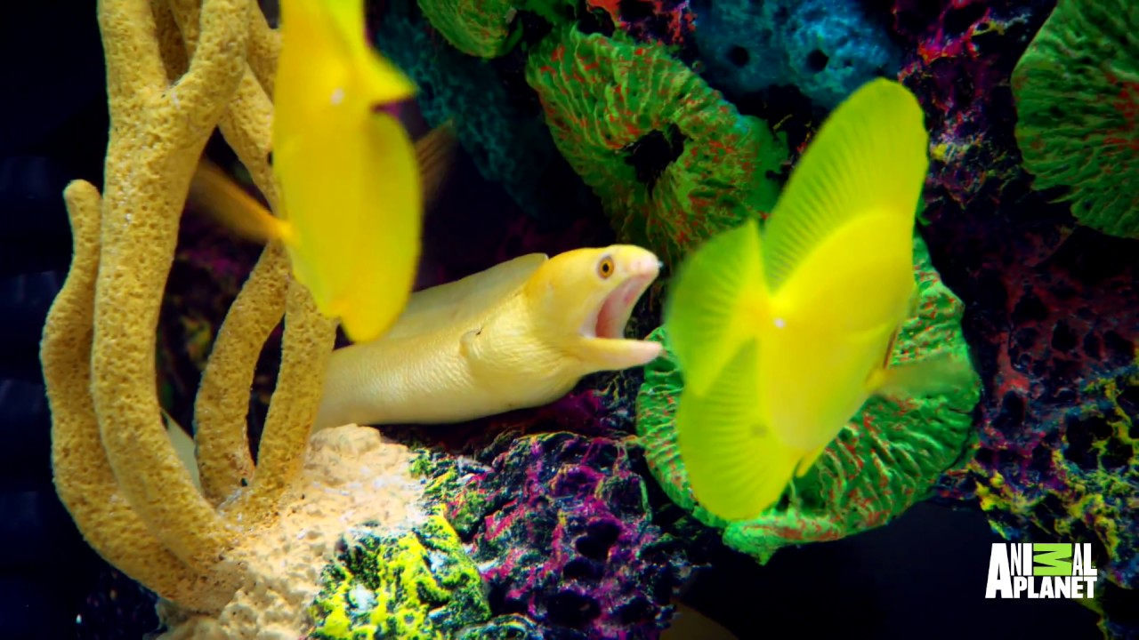 Shinny Caribbean: Wyclef Jean's Got A Sleek, Shiny Caribbean Fish Tank