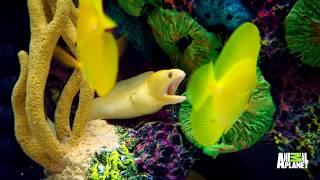 Wyclef Jean's Got A Sleek, Shiny Caribbean Fish Tank | Tanked