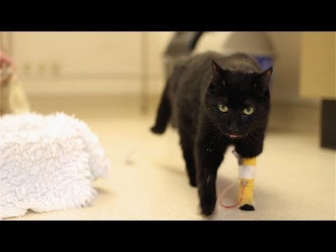 N2 the Talking Cat Battles Cancer - Week 1
