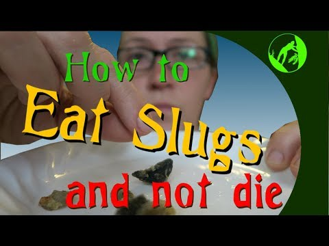 How to Eat Slugs and not Die
