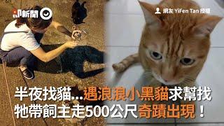 半夜找貓...遇浪浪小黑貓求幫找 牠帶飼主走500公尺奇蹟出現!