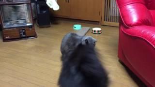 ちょっかい出す犬、耐える猫