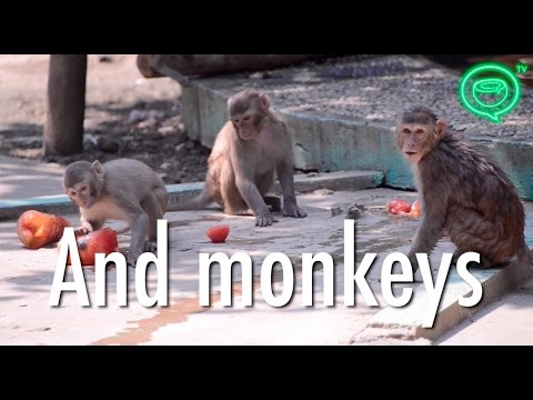 Hot weather and cool snacks at Yangon's Zoo | Coconuts TV