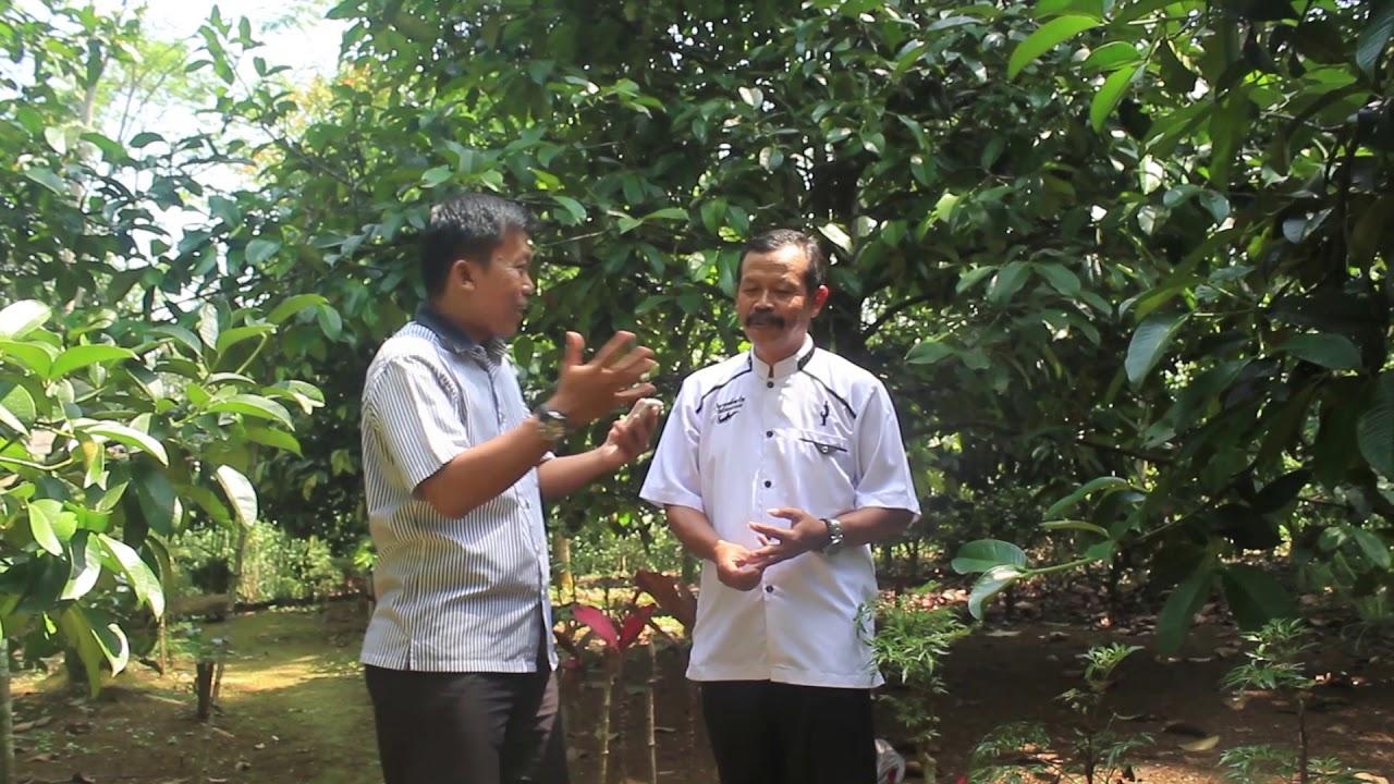 Manggis Purwakarta | Sumber: YouTube