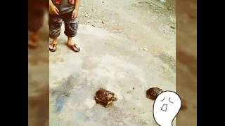 Balapan kura-kura 🐌 #(( Zeyn Shega ))