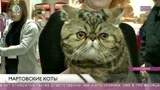 Международная выставка кошек «Вычегодские зори. Веселые коты». 15 марта 2016