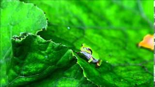 アリを一瞬で食べてしまった蛙.