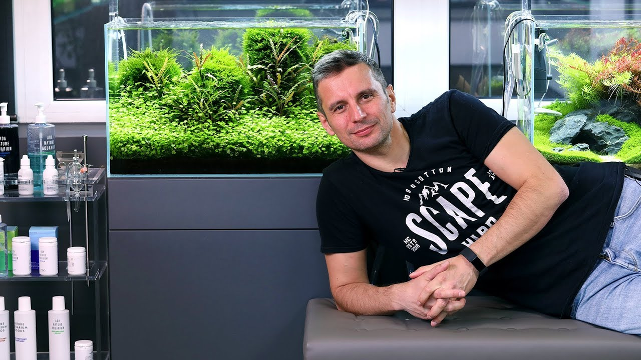 Aquascaping Beautiful Small Aquarium With A Special Foreground Plant Youtube
