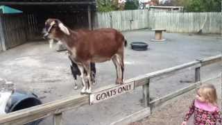 cute goats only funny animals sign on fence