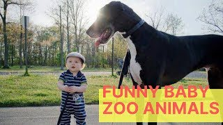 Baby and Animals Funny Kids Video at Zoo - Funny Kids Fails Babies Vines