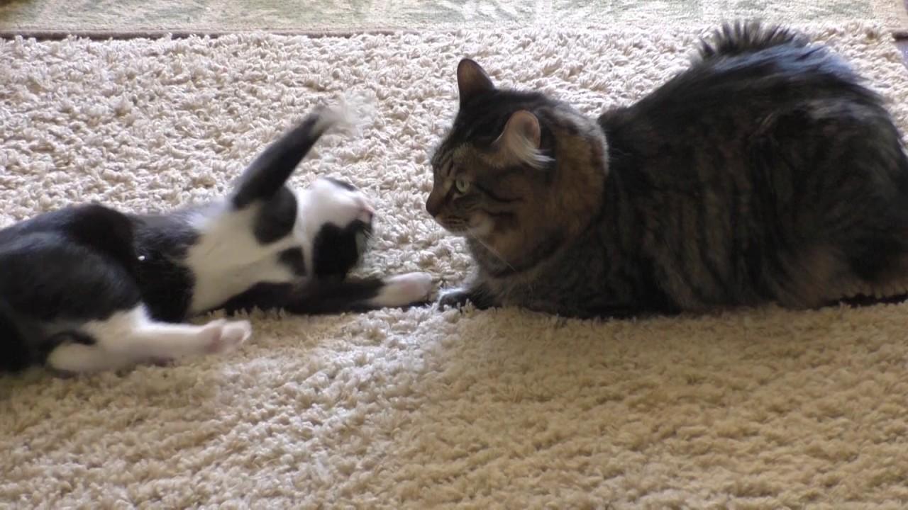 Puppies Kitties Quills Kids Music Vet Clinic Cars Snakes