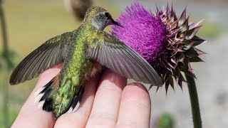 Once In A Lifetime Bird Photography Experience with the Nikon D850 - Hummingbird Lands in My Hand