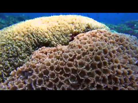 Paul-Ranky-Tubbataha-01-Dives-RangerStation-AmosRock-Ko-ok-4Kvideo-MasterEdit-HD