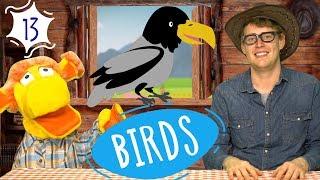 Изучаем птиц - Названия животных - Развивающие видео для детей - Песня на английском