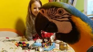 Попугай ара и бижутерия