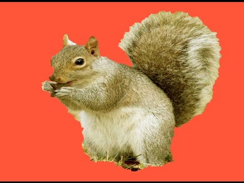 3ds max tutorial modeling squirrel  Part 1