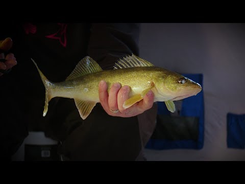 Fox River Ice Walleyes - In-Depth Outdoors Season 12, Episode 7