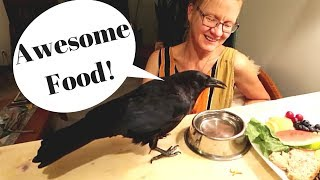 PET CROWS AWESOME FEEDING VIDEO