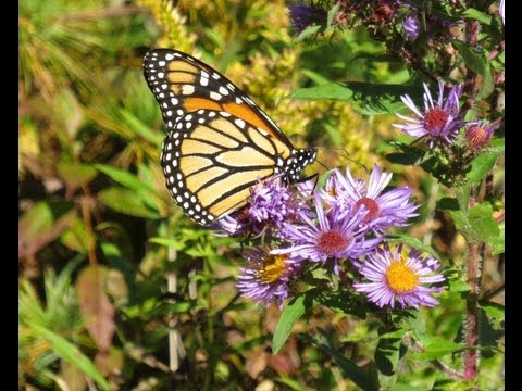 Walk in the Park: Land Trust Preserves and Monarch Butterflies