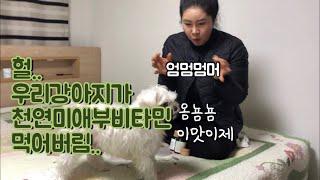 강아지가 미애부 천연 비타민을 먹는다..?