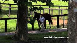 Dietrich Equine Insurance - Farm